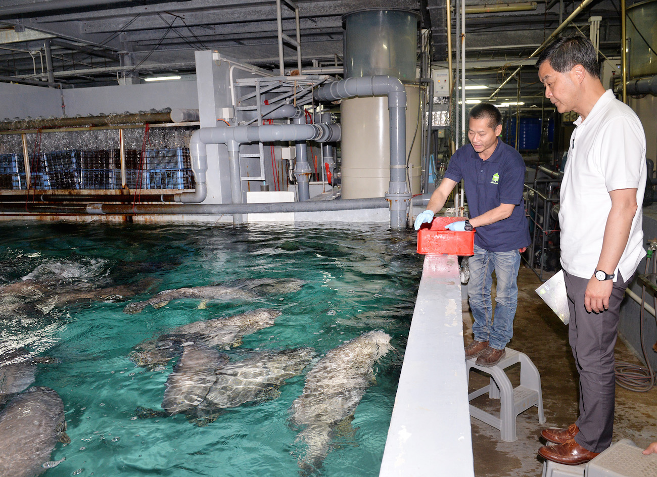CY Visits Grouper Farms in Hong Kong