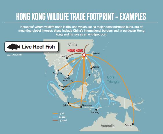 Hong Kong wildlife trade footprint for reef fish