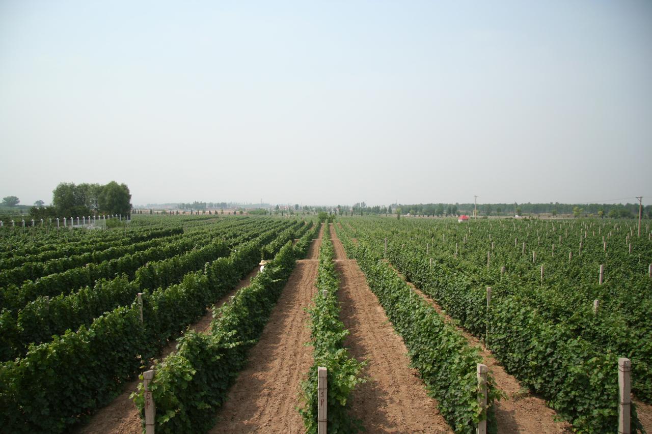 Grace Vineyards China