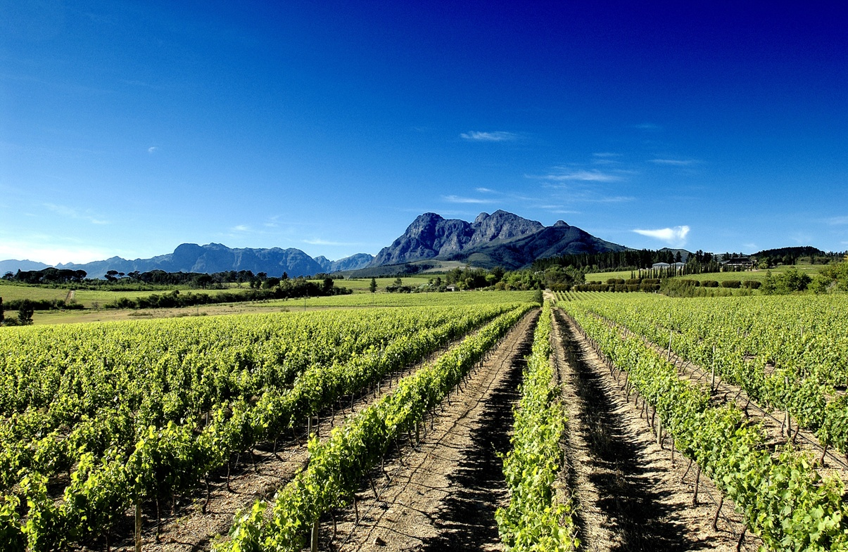 South africa a new world wine producer with over 350 for Jardin winery south africa