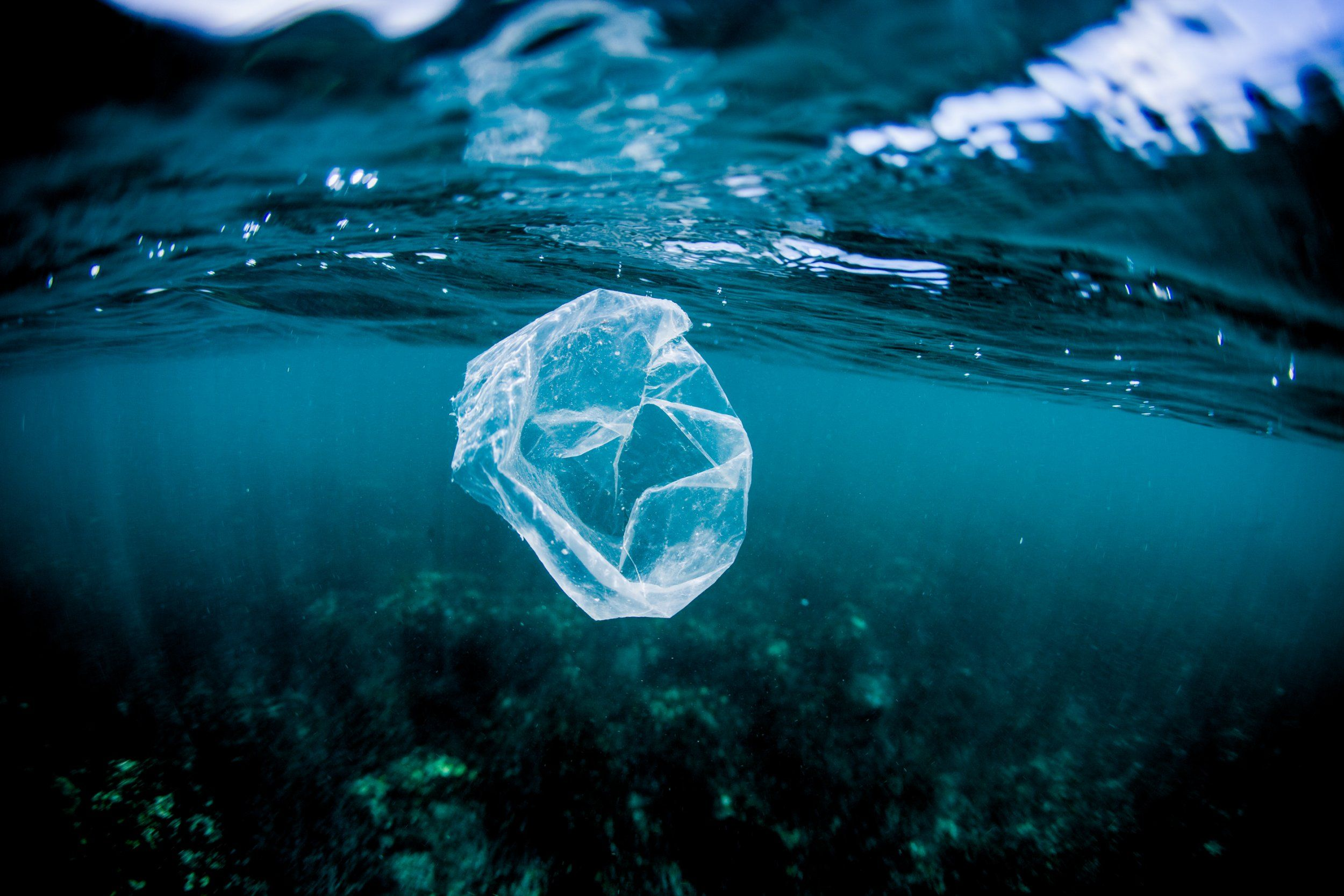 Plastic bags in the ocean