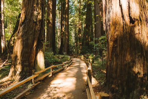 Walking Among Giants: Muir Woods National Monument