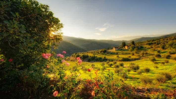 Tuscan Countryside, Tuscany