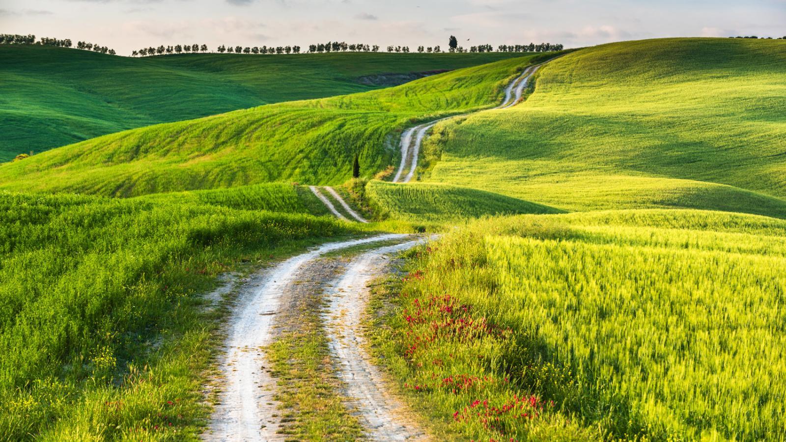 Tuscan Countryside Holidays - Topflight Tuscany