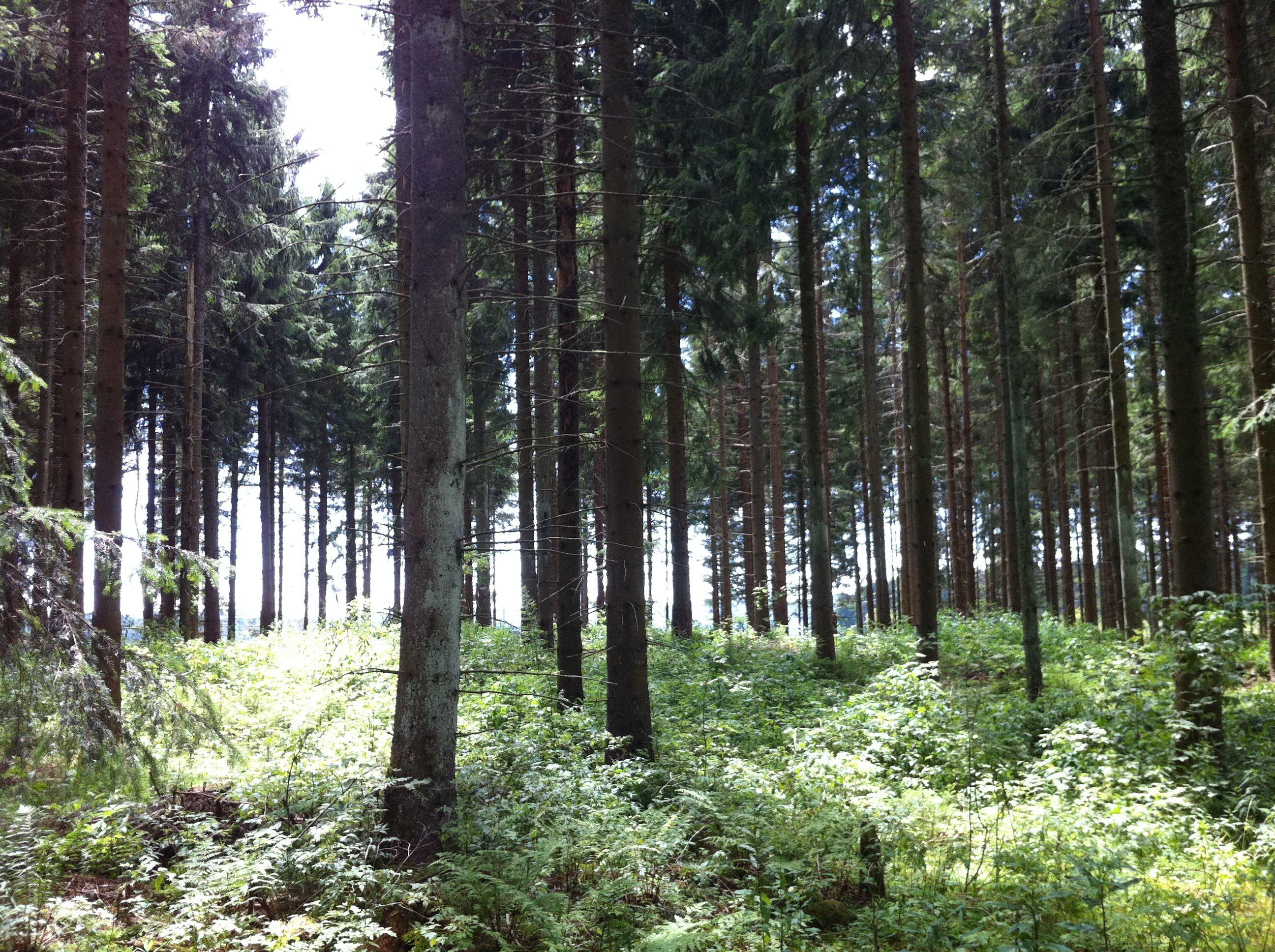 Sonnenwald_dkthxb