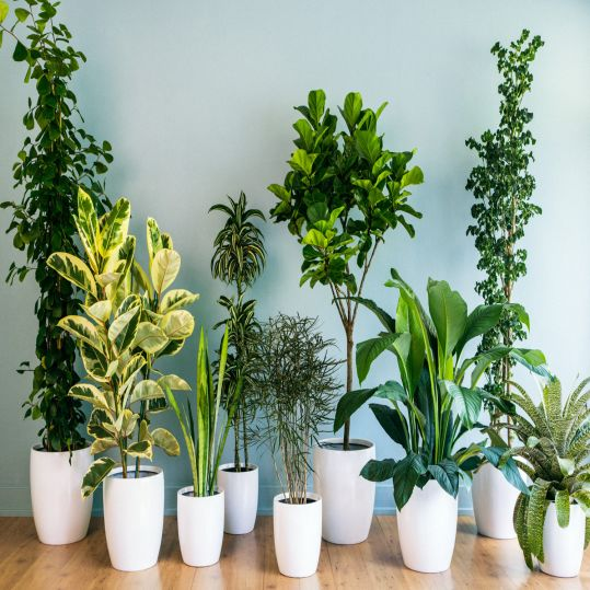 Beauty Plants for Air Purifying | SARAÈ Blog