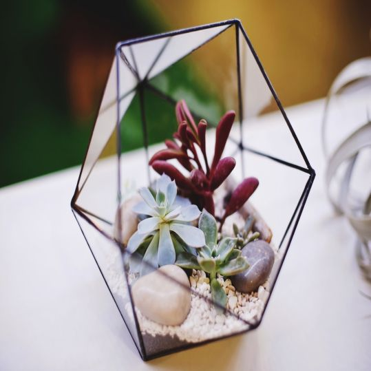 A Beauty Terrarium, Beautiful Plants on Transparant Glass | SARAÈ Blog