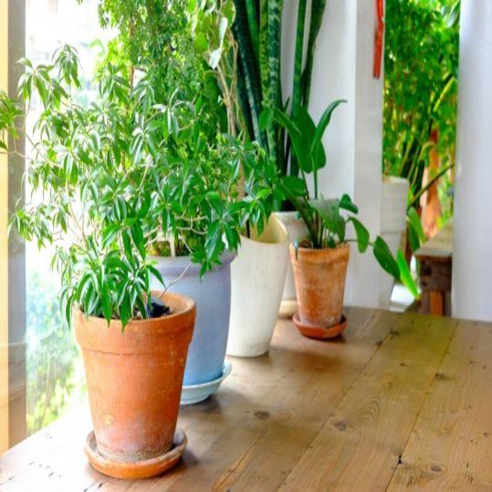 Ketika Rumah Tetap Bersinergi dengan Alam | SARAÈ Blog