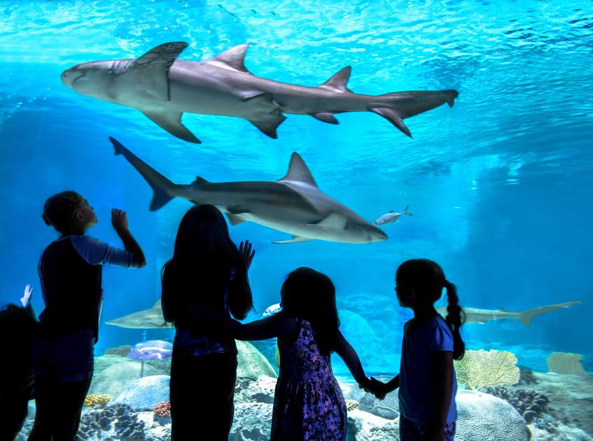 The OdySea Aquarium A-Scare-ium Halloween Celebration