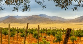 Intimate Small Group Wine Country Touring - with Driver & Guide