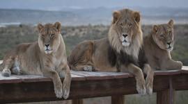 Kathleen Reeder Wildlife Photoghraphy