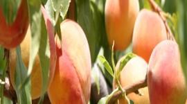 22nd Annual Peach Festival – Paint the Town Peach