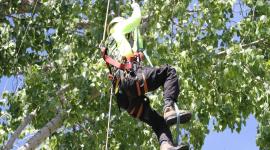 2017 ACTC Tree Festival & Climbing Championship
