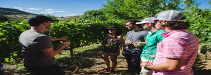 Exploring Arizona's Winery Regions