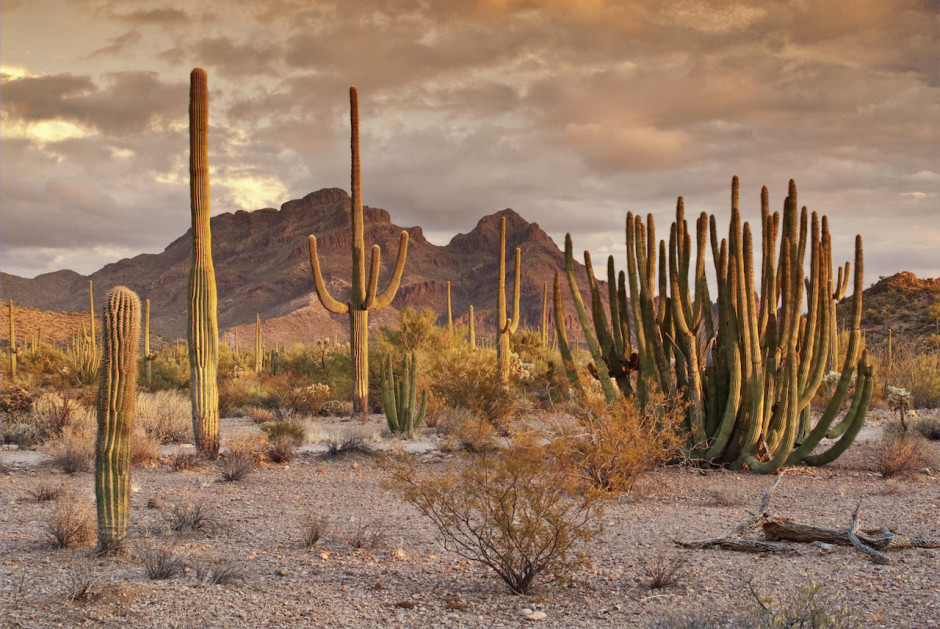 Organ Pipe Cactus National Monument - Photo by Mambo NumberFive