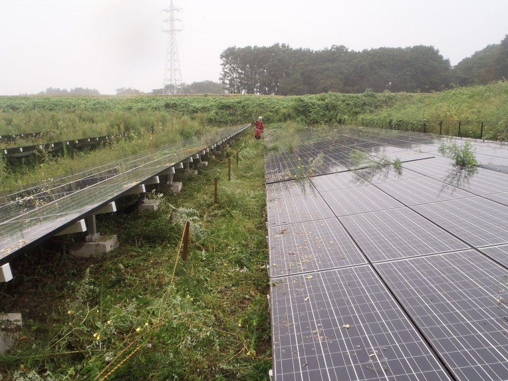 太陽光発電野立てサイト メンテナンス風景4