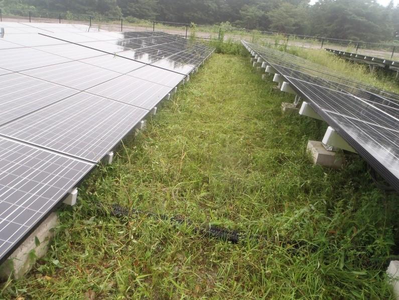 太陽光発電野立てサイト メンテナンス風景6