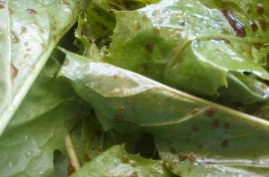 Salade de pissenlit au magret de canard, fromage bleu, croûtons, noix