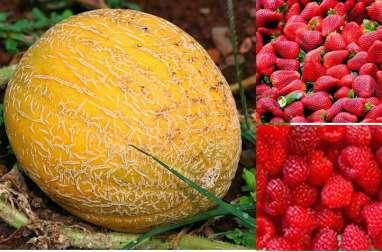 Melon surprise, un dessert tout fruits