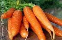 Cuire des carottes primeur