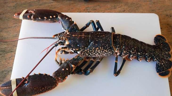 Homard ou langouste grill s recette du homard grill - Cuisiner le homard vivant ...