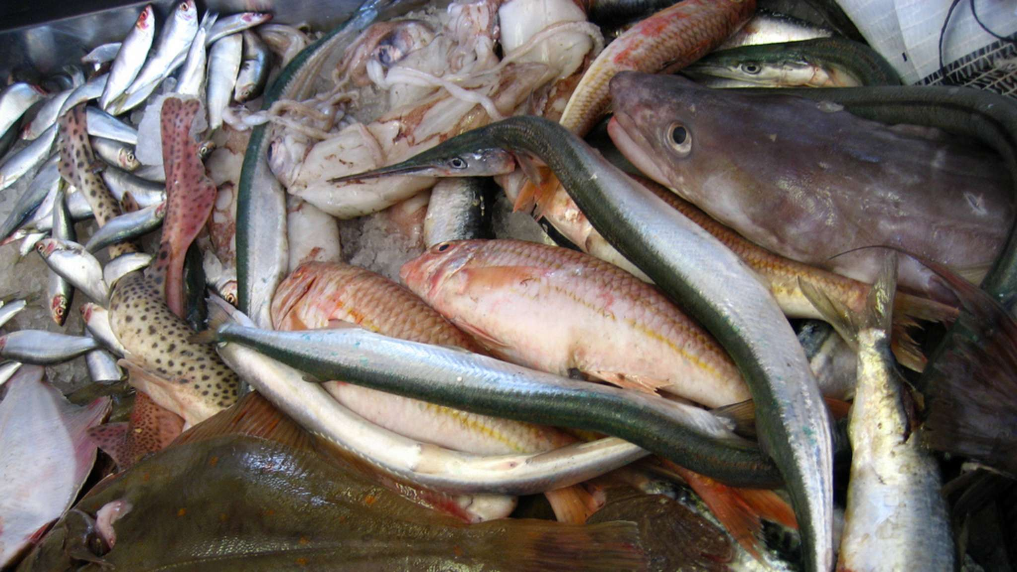 Classement des poissons