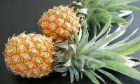 L'ananas, le fruit le plus féminin