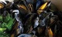 Moules marinière