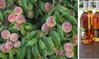 Salade de fruits aux pêches de vigne, arôme chouchen