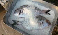 Dorade en croûte de sel