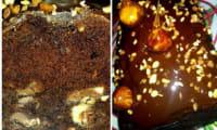 Cake chocolat praliné aux noisettes