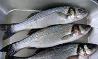 Bien choisir le poisson