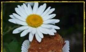 Gâteau aux Noix et Miel