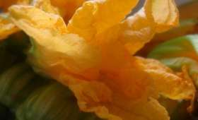 Fleurs de courgettes farcies