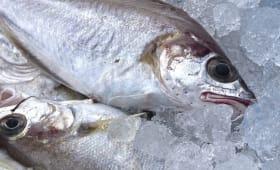 Techniques appliquées aux poissons et fruits de mer