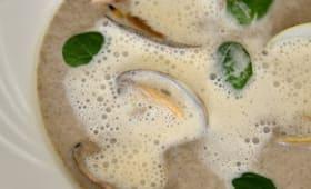 Palourdes au thé vert sencha supérieur sur velours de champignons