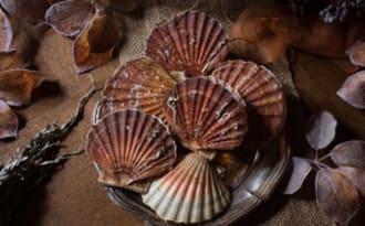 Meurette de noix de saint-jacques