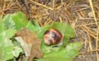 Mes Escargots Farcis