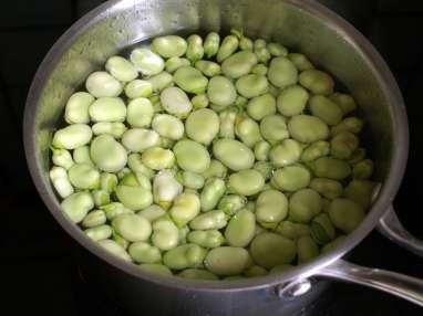 La fève, le plus vénérable ancêtre du monde des légumes