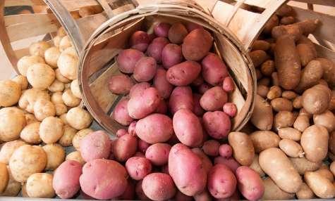Les pommes de terre de conservation