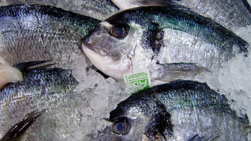 Idées de recettes à base de poisson