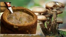 Croustades aux champignons, oeufs et fromage