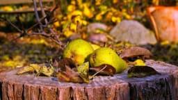 Confiture de poires aux zestes d'agrumes de citron et d'oranges