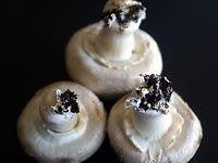 Nettoyer les champignons - Etape 1