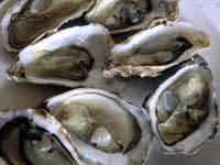 Vidéo : ouverture des huîtres