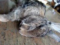 Dépouiller et découper un lapin