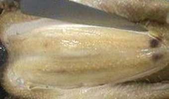 Poule au pot - Etape 9
