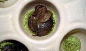 Cassolette d'escargots au beurre d'ail - Etape 5