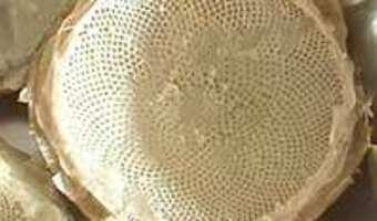 Cuire et parer un fond d'artichaut - Etape 9