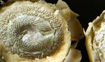 Cuire et parer un fond d'artichaut - Etape 7